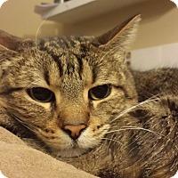 Adopt A Pet :: bubba - Mesa, AZ