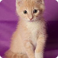Adopt A Pet :: Morgan - Gilbert, AZ