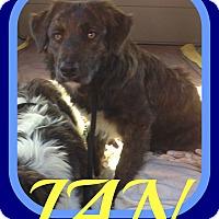 Adopt A Pet :: IAN - Middletown, CT