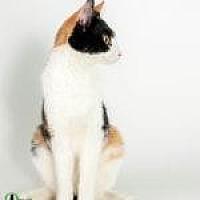 Adopt A Pet :: Nessa - Savannah, GA