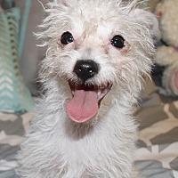 Adopt A Pet :: Dory - los Angeles, CA