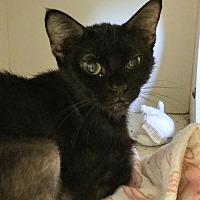 Adopt A Pet :: Angel *$20 Fee 8/2 - 8/31* - Ottawa, KS