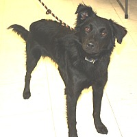 Adopt A Pet :: Charcoal - available 9/24 - Sparta, NJ