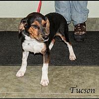 Adopt A Pet :: Tuscon - Ada, OK