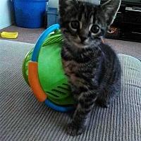 Adopt A Pet :: Iris - Calimesa, CA