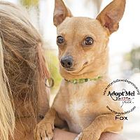 Adopt A Pet :: FOX - Inland Empire, CA