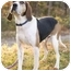 Photo 1 - Coonhound (Unknown Type)/Hound (Unknown Type) Mix Dog for adoption in Bloomsburg, Pennsylvania - Angus
