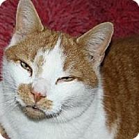 Adopt A Pet :: Simon - Jenkintown, PA