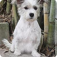 Adopt A Pet :: Bella - North Palm Beach, FL