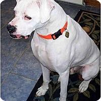 Adopt A Pet :: Duke - Woolwich, ME
