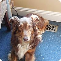 Adopt A Pet :: Annie - Washington, IL