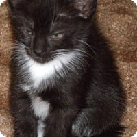 Adopt A Pet :: ALMOND - Acme, PA