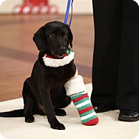 Adopt A Pet :: Hermie - Marlton, NJ