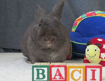 Other/Unknown Mix for adoption in Newport, Delaware - Baci