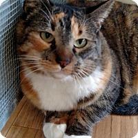 Adopt A Pet :: Quilt - Prescott, AZ