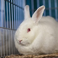 New Zealand Mix for adoption in Los Angeles, California - Diamond Lil