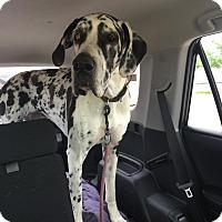 Adopt A Pet :: Isabel - Albuquerque, NM