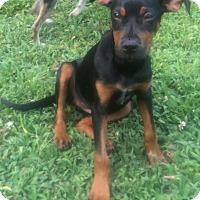 Adopt A Pet :: Lalia - Smyrna, GA