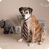 Adopt A Pet :: Rastus - Scottsdale, AZ