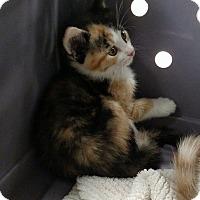 Adopt A Pet :: Sangria - Fredericksburg, VA