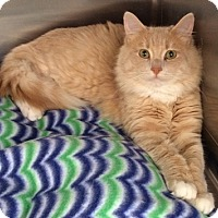 Adopt A Pet :: SawyerH - North Highlands, CA