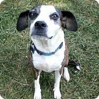 Adopt A Pet :: Lera - Greensboro, NC