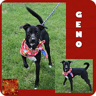 Jack Russell Terrier Mix Dog for adoption in Washington, Pennsylvania - Geno