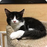 Adopt A Pet :: Uzi - Riverside, CA
