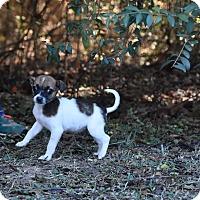 Adopt A Pet :: Minnie - South Dennis, MA
