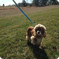 Adopt A Pet :: Amber - Adopted! - Kannapolis, NC