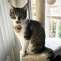 Adopt A Pet :: Zin - Los Angeles, CA