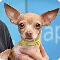 Adopt A Pet :: PB - New York, NY