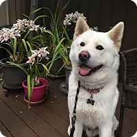 Adopt A Pet :: Snowball - Hayward, CA