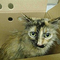 Adopt A Pet :: UNKNOWN - Rancho Cucamonga, CA