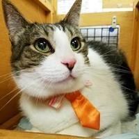 Adopt A Pet :: Almonzo - Corvallis, OR