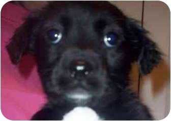 Terrier (Unknown Type, Small) Mix Puppy for adoption in Chapel Hill, North Carolina - Aidan