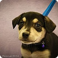 Adopt A Pet :: Wesley - Broomfield, CO