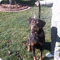 Adopt A Pet :: Jeepers - latrobe, PA