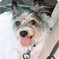 Adopt A Pet :: Chelsea - Clementon, NJ