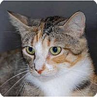 Adopt A Pet :: Willow - Warminster, PA