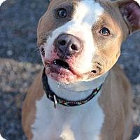 Adopt A Pet :: Lydia - Tinton Falls, NJ