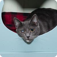Adopt A Pet :: Sammie - Chicago, IL