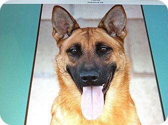 German Shepherd Dog Mix Puppy for adoption in Los Angeles, California - JENNY VON GENF
