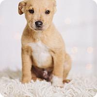 Adopt A Pet :: Thor - Portland, OR