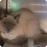 Adopt A Pet :: Maestro - Rosamond, CA