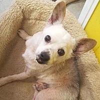 Adopt A Pet :: Grandpa - Charlotte, NC