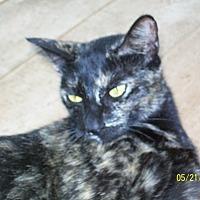 Adopt A Pet :: Marlee - Mexia, TX
