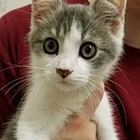 Adopt A Pet :: Peter Pan - Anderson, IN