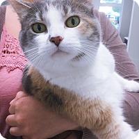 Adopt A Pet :: Kali - Webster, MA
