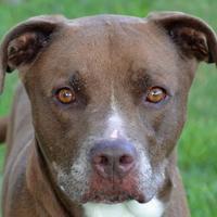Adopt A Pet :: Yeti - Englewood, FL